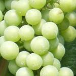 Chardonnaydruvor