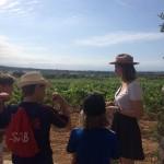 Besöka vingårdar